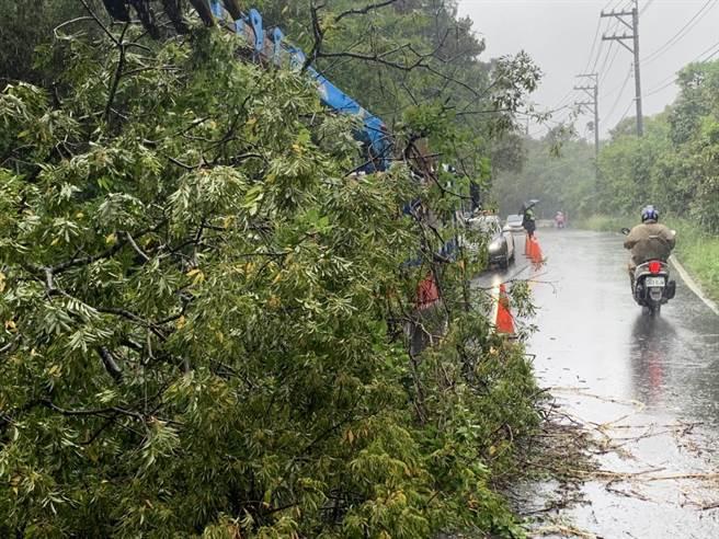 颱風吹倒大樹路過車輛擦撞所幸未釀嚴重災害。(警方提供/呂筱蟬桃園傳真)