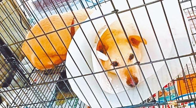 台北市動物之家因收容量嚴重不足,北市府斥資6.9億重建,近日因要追加預算惹議。(北市動保處提供/張薷台北傳真)