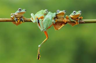 台灣人在大陸》「井蛙」是如何煉成的
