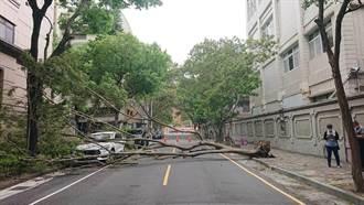颱風未到樹先倒 台南家齊高中校樹橫跨馬路砸毀汽車