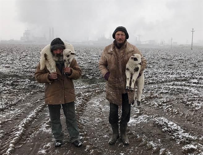 2021年IPPAWARDS大獎以及年度攝影師匈牙利攝影師Istvan Kerekes利用iPhone 7拍攝的外西凡尼亞牧羊犬。(摘自IPPAWARDS官網)