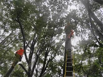桃園復興區強風豪雨904戶停電 台電人員搶修中