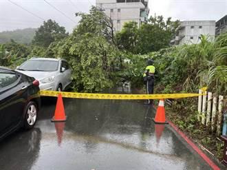 烟花雨彈不停 新北災情統計64件 路樹傾倒最多