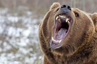男衰遭灰熊盯7天 躲鐵皮屋肉搏護命 奇蹟獲救