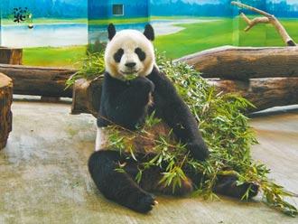 台北兒童新樂園、動物園 8月起有條件解封