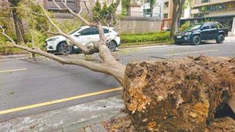 台南烟花外圍強風吹倒路樹 砸毀2汽車