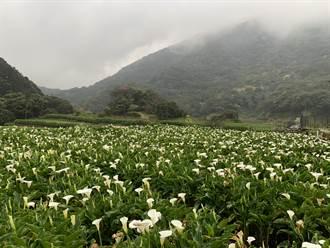 時代雜誌世界最佳百大景點 台北獲選文化寧靜城