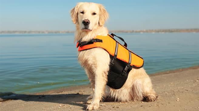 義大利一名15歲少女遭海浪捲走,被海邊執勤的救難犬發現,立即跳下海救人。圖片為示意圖(圖/shutterstock)