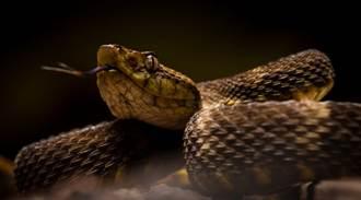 科學家以蛇毒製成超級止血劑 幾秒鐘就能止血