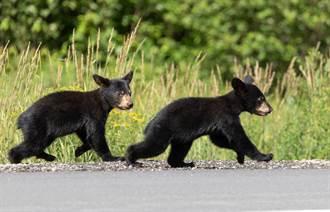 車庫傳怪聲開門發現4小熊 他抬頭驚見熊媽飛撲秒嚇歪