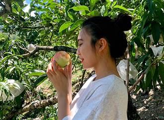參山處放寬風景區容留量  邀請遊客上梨山品嚐水蜜桃