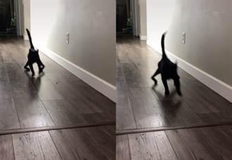 汪見黑貓「大法師式跑法」嚇到定格 原因藏洋蔥