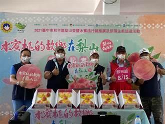 台中梨山水蜜桃熱情開賣 肉質緻密多汁最佳品嚐時節