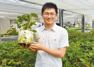 侯喬偉溫室栽植 5月也能吃草莓