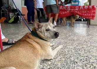 沒帶寵物打狂犬病疫苗  飼主最重罰15萬