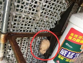 鐵窗長一顆「神秘蟲窩」真相曝 網歪樓笑:明明是茶葉蛋