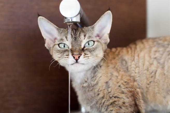外國一隻貓咪為了躲避洗澡,竟雙手抓住水龍頭,做出一系列高難度「體操動作」。(示意圖/達志影像)