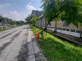 台南6、7月倒樹倒80多件 南市府推「一剪二檢」