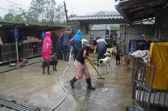 助民間動物收容所環境清消  新北市動保處發154瓶消毒水