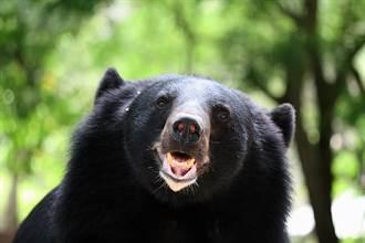 猛獸竄出嚇壞人 下秒霸佔廢棄床墊狂蹭 反差萌變泰迪熊