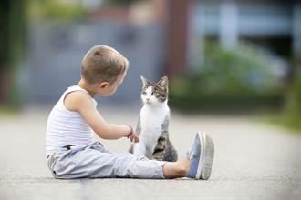男童落寞坐路邊偷哭 暖貓不放心靠近 靈性舉動融化全場