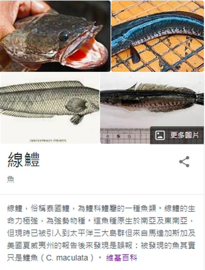 1名網友日前發現馬路邊有許多魚疑似遭大雨沖至路邊,好心將魚抓起並丟入附近魚塭中;不料網友發現該魚竟是惡名昭彰的外來種「泰國線鱧」。(翻攝自維基百科)