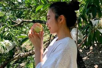 梨山水蜜桃正香甜 遊客容留量放寬 避暑上山好品嚐