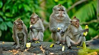 泰國街頭驚見「獼猴海」 上千隻猴子淹沒道路 眾人傻眼