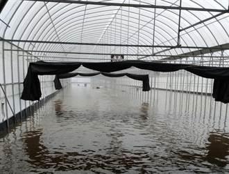 嘉義縣新港鄉日累積雨量破300毫米全台第一 葉菜類受損達4成