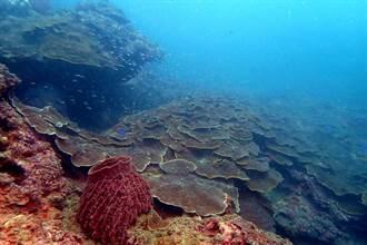 基隆潮境疫情封閉2個月 珊瑚白化復原