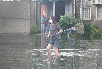 暴雨讓嘉義縣農會錦鯉集體逃家 她曝奇葩搶災畫面