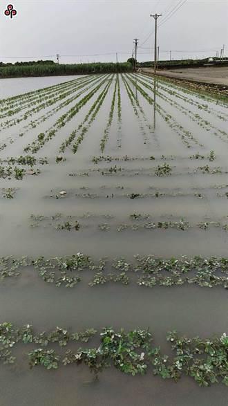 南部連日大雨蔬菜慘泡水 批發價漲近2成
