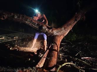 南投大樹倒伏橫斷道路 員警冒雨連夜鋸除