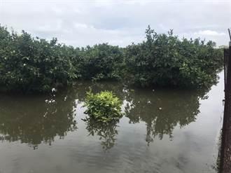 屏東雨勢停歇林邊仍積水不退 農民嘆:蓮霧園退水要等1個月