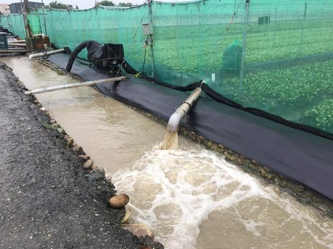 2日西南氣流豪大雨造成雲林縣農田淹水嚴重。(周麗蘭攝)