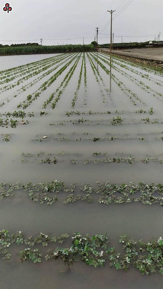台灣蔬果大縣為、雲林、嘉義、台南、高屏等近日豪雨不斷,許多農田淹水情況嚴重,導致進貨品質差異大。(本報系資料照)