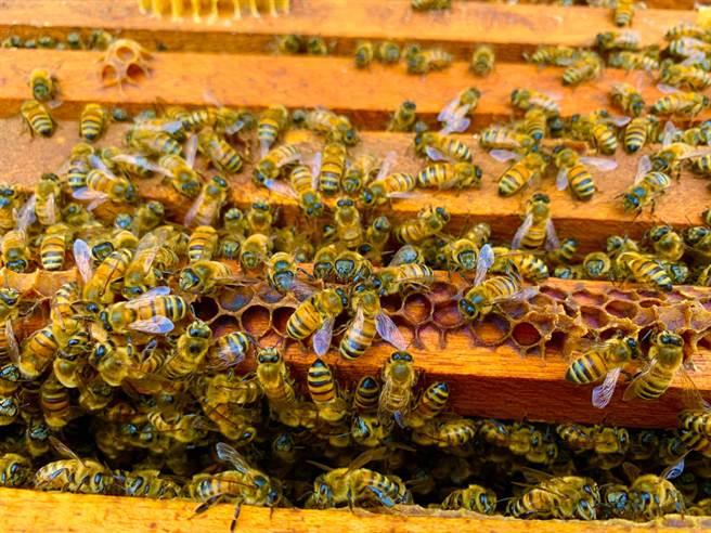 美國一對夫妻在冬天時買下一間舊農舍,當時賣家告知牆上有蜜蜂,但他們不以為意,沒想到春天一到這才驚覺事情非同小可。(示意圖/達志影像)