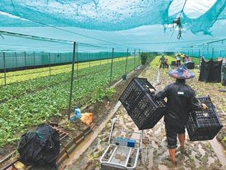 雲嘉南豪雨成災 農損逾3500萬