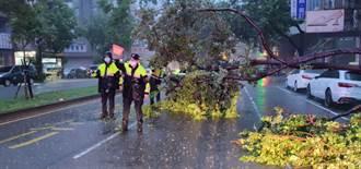 台中連日大雨路樹斷裂橫擋車道 警漏夜冒雨救援
