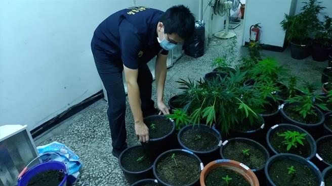 兄弟檔設「大麻農場」辯稱自用 警抄出135株及4公斤成品。(圖/高雄市刑大提供)