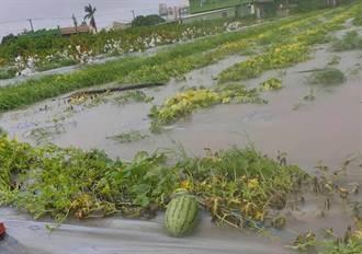 雨彈狂炸辛苦付水流 彰化沿海瓜田全泡湯了