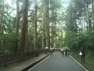 溪頭森林迎賓 芬多精增強免疫力