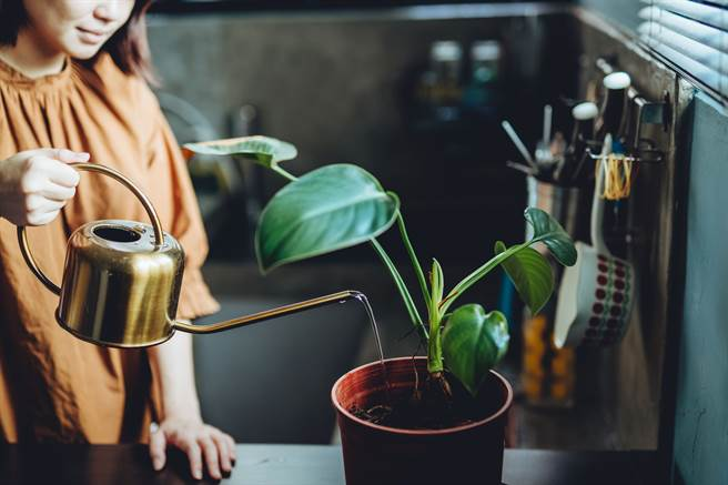 綠意盎然的生活空間有助心情放鬆,可增加WFH 時的工作與生活品質。(攝影/張晋瑞)