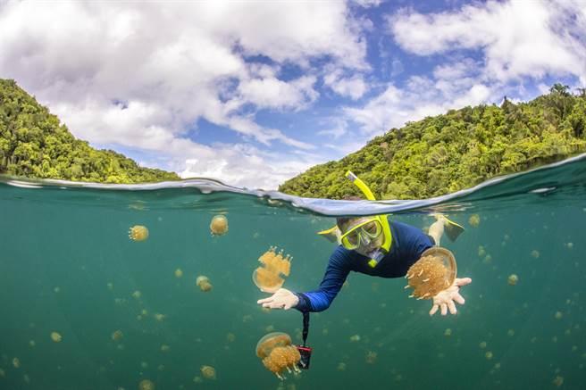 台灣與帛琉之間的旅遊泡泡可望重啟。圖為帛琉知名景點「水母湖」。(KKday提供/陳祐誠傳真)