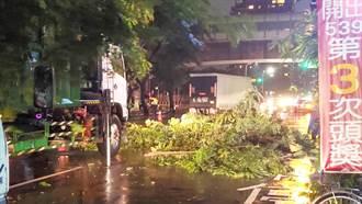 盧碧風雨太猛烈 台中路樹遭攔腰折斷佔2車道