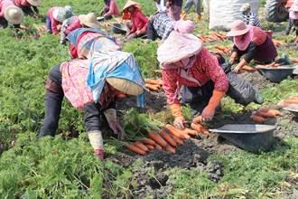 蔬菜均價飆高 農糧署:夏季汛期合理範圍