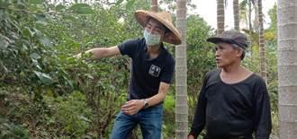 花蓮在地青農挺原鄉小農 契作苦茶籽製世界級苦茶油