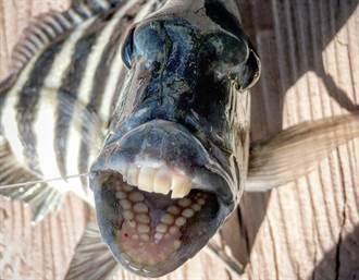 怪魚被釣起露齒笑 嘴裡長滿人牙 釣客嚇傻