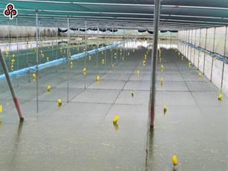農業災損破1.5億 陳吉仲:6縣市全品項將為天然災害現金救助對象