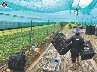 8月上旬農損逾2億 農委會簡化農業救助災損認定 明公布細節